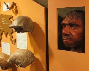 neandertal-3